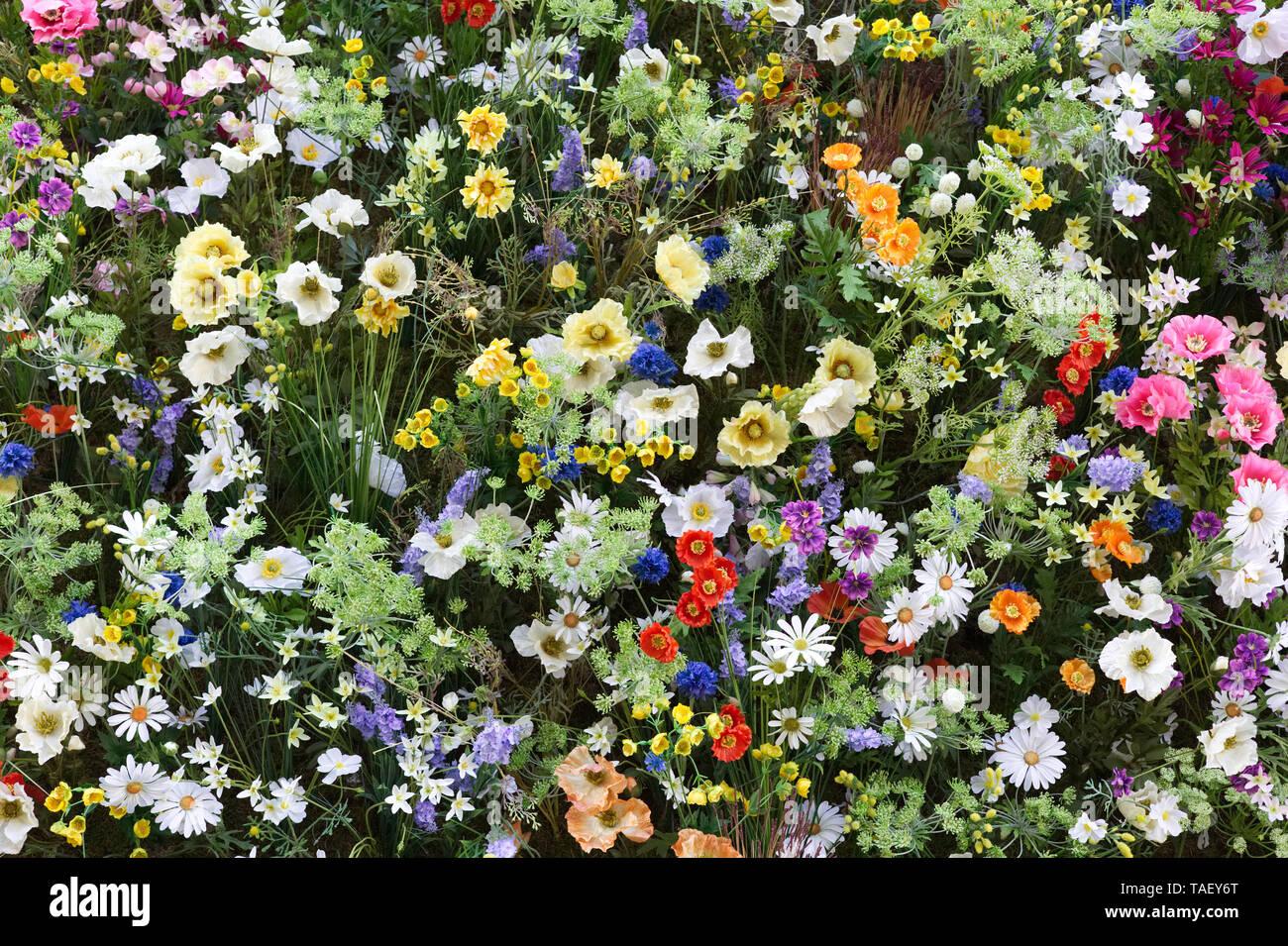 Chelsea in Bloom 2019, The Ivy, Chelsea Garden, wildflowers Stock Photo