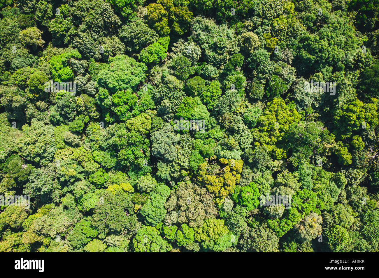 Aerial top view forest, Texture of forest view from above. background is green from jungle or rainforest. Stock Photo