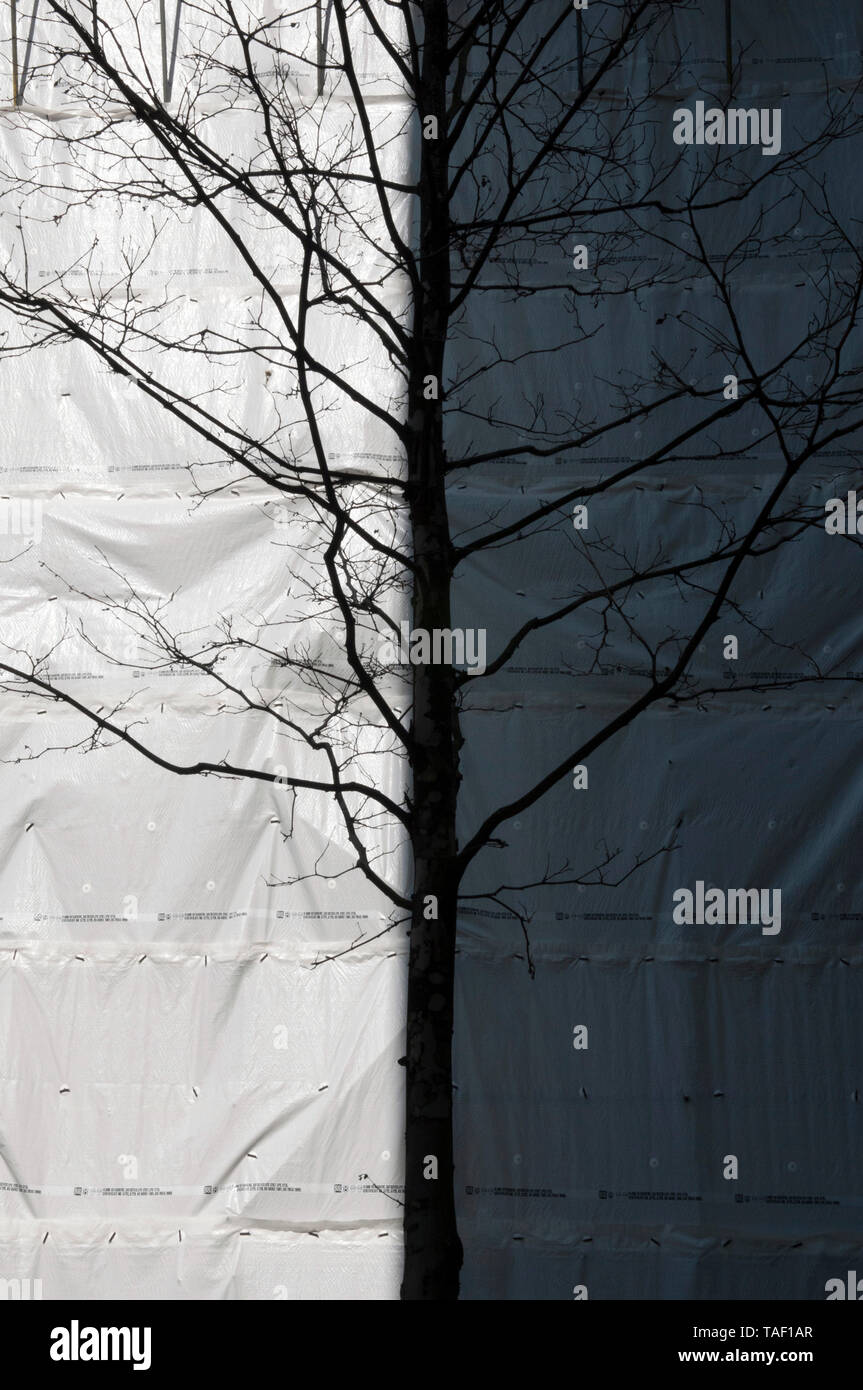A Leafless Tree In Front Of A Building Covered In Plastic Scaffold Sheeting - Stock Image