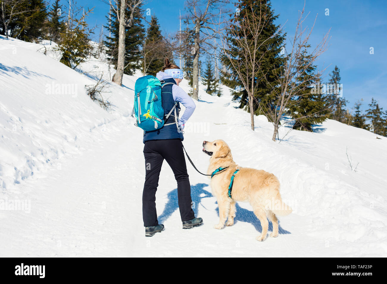 Germany, Bavarian Forest, Lusen, woman with dog hiking in winter - Stock Image