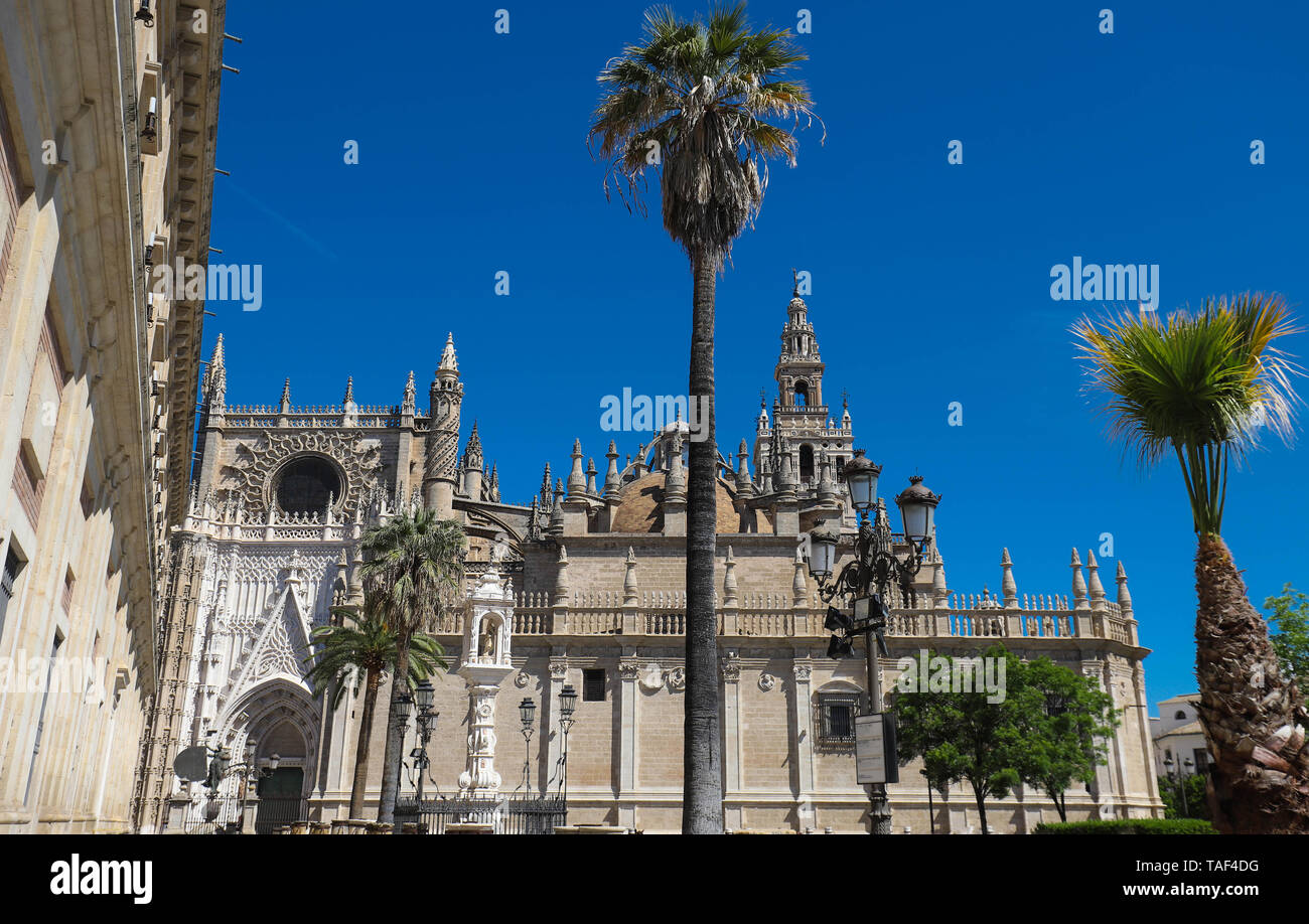 View of famous Seville Cathedral with the Giralda in the background - Stock Image
