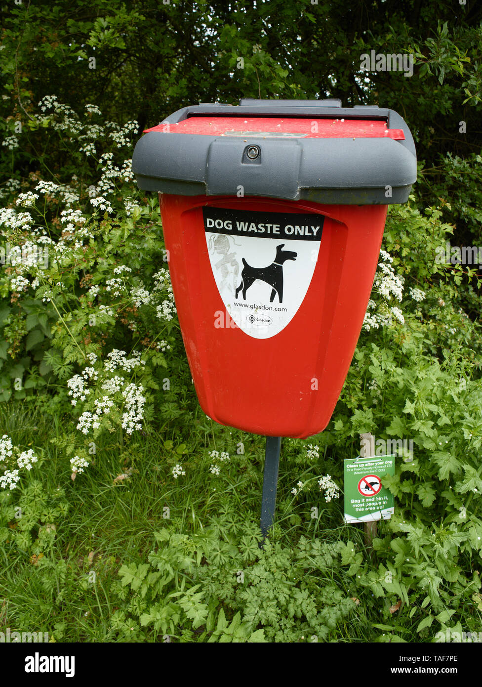Red dog mess bin and cow parsley flowers in the Kent countryside, England, United Kingdom, Europe - Stock Image