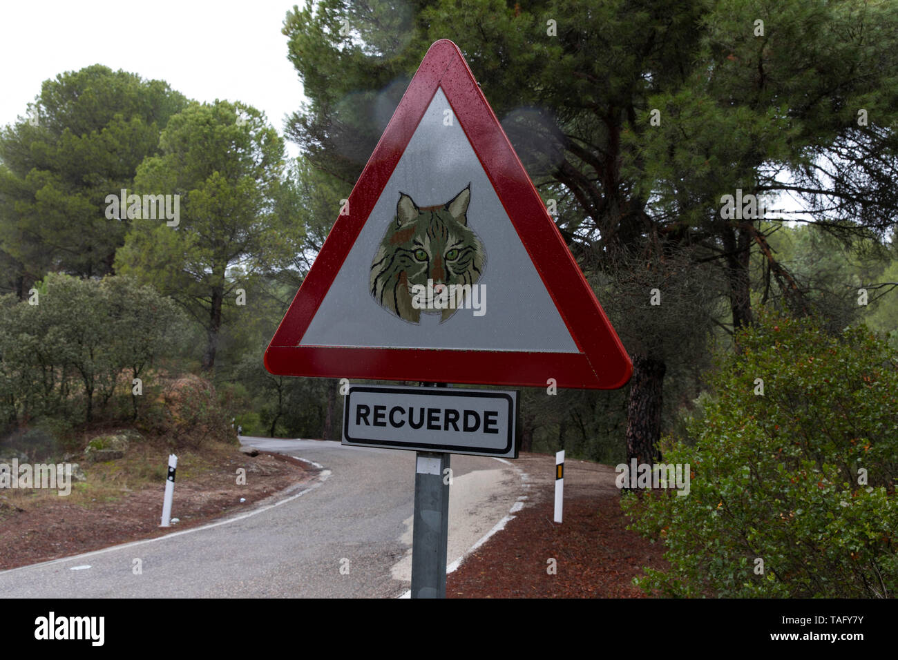 Traffic sign in the Spanish Lynx (Lynx pardinus) area, Andalusia Spain - Stock Image