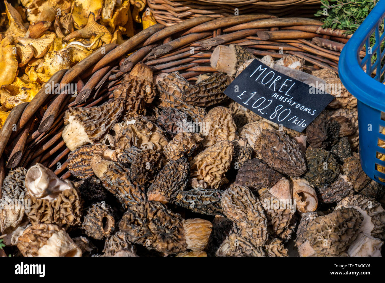 MOREL MUSHROOMS MARKET DISPLAY  Luxury rare expensive fresh Morel mushrooms with price label £102.80 pr Kilo at Borough Market farmers market Southwark London UK Morchella, the true morels, is a genus of edible sac fungi closely related to anatomically simpler cup fungi in the order Pezizales (division Ascomycota). These distinctive fungi have a honeycomb appearance due to the network of ridges with pits composing their caps. Morels are much prized by gourmet cooks, particularly in haut cuisine - Stock Image