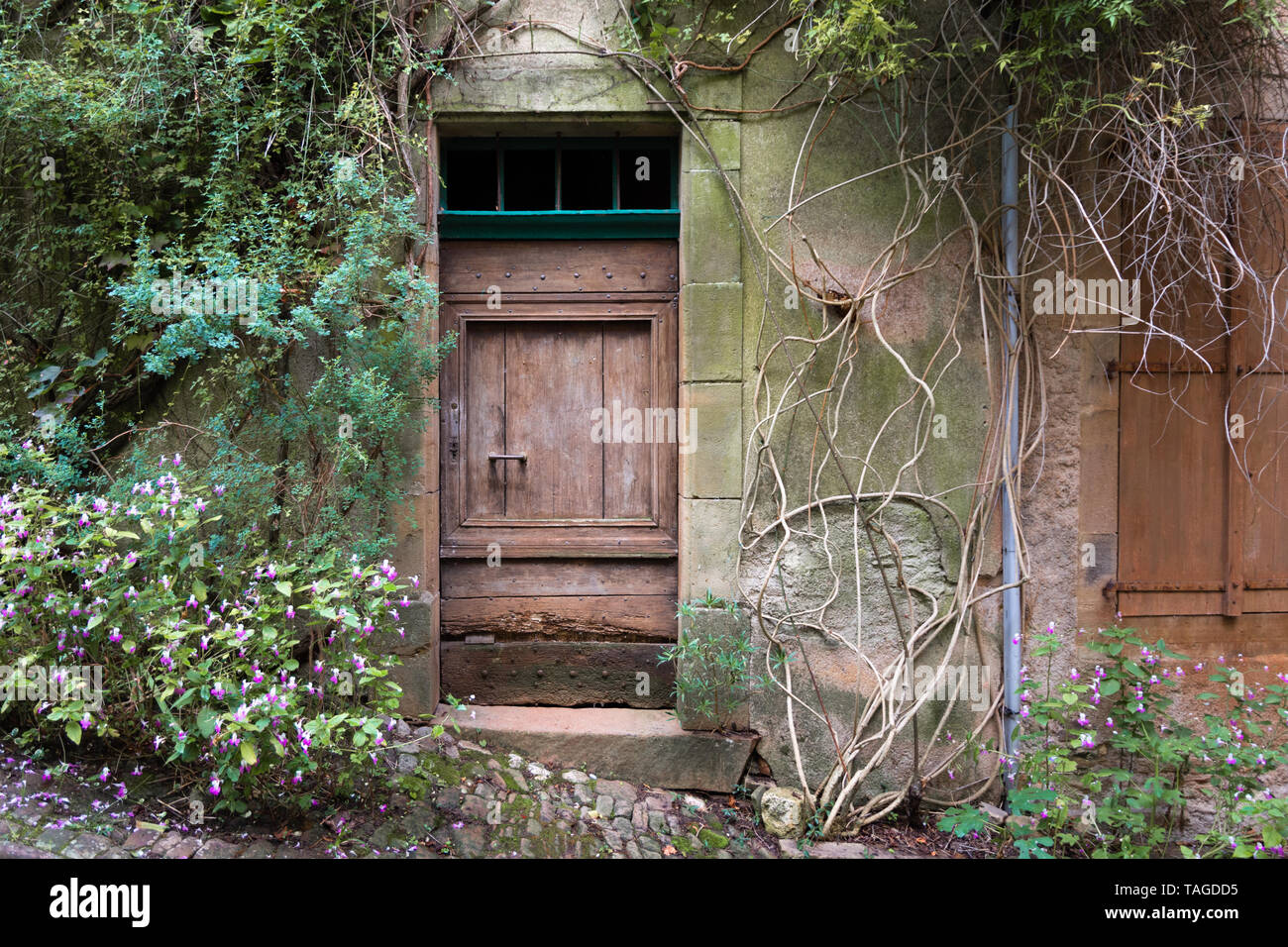 Brown wooden door in an overgrown and decrepit wall in a medieval French village - Stock Image