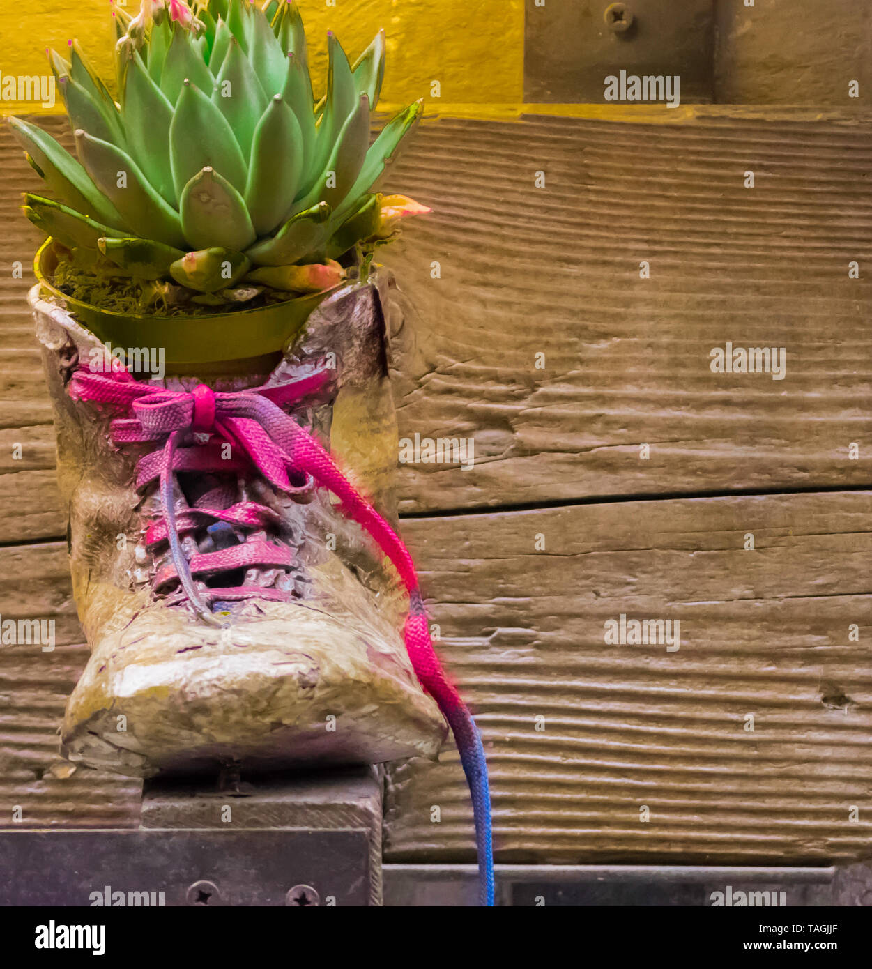 Montepulciano 2019. Used and colored shoe with a Cactus plant inside. April 2019 in Montepulciano. Stock Photo