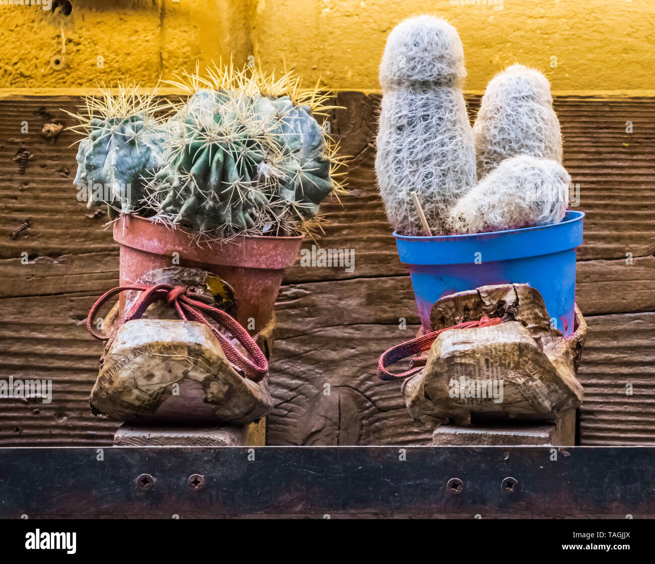Montepulciano 2019. Pair of used and colored shoes with Cactus plants inside. April 2019 in Montepulciano. Stock Photo