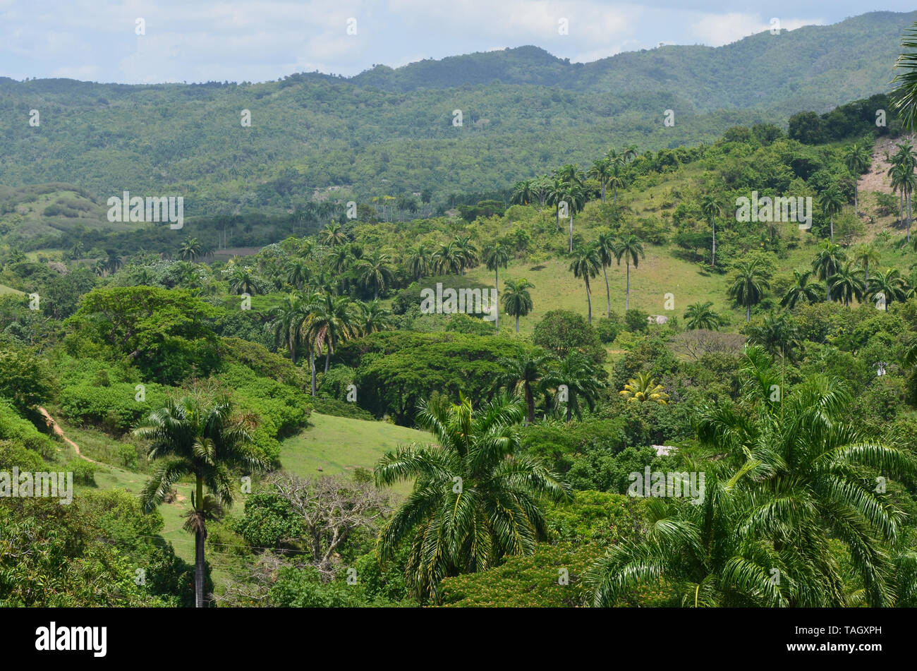 Fields and forested slopes in Guisa municipality (Granma province, Cuba), in the vicinity of Pico de la Bayamesa national park, southern Cuba Stock Photo