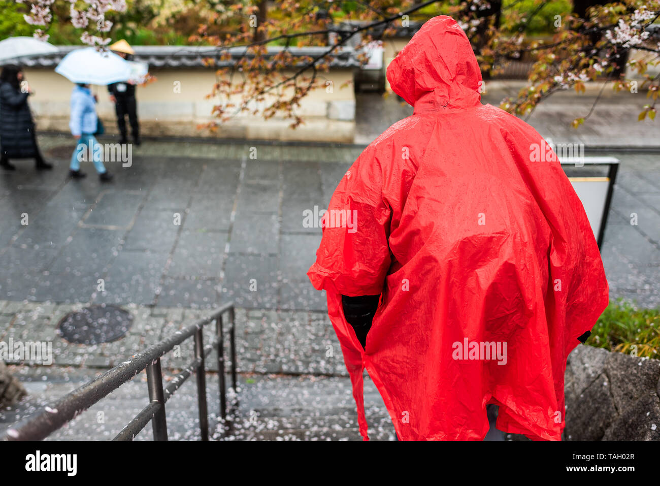 Man in red poncho walking down steps during rainy day on street road sidewalk near Gion and fallen cherry blossom flower petals - Stock Image