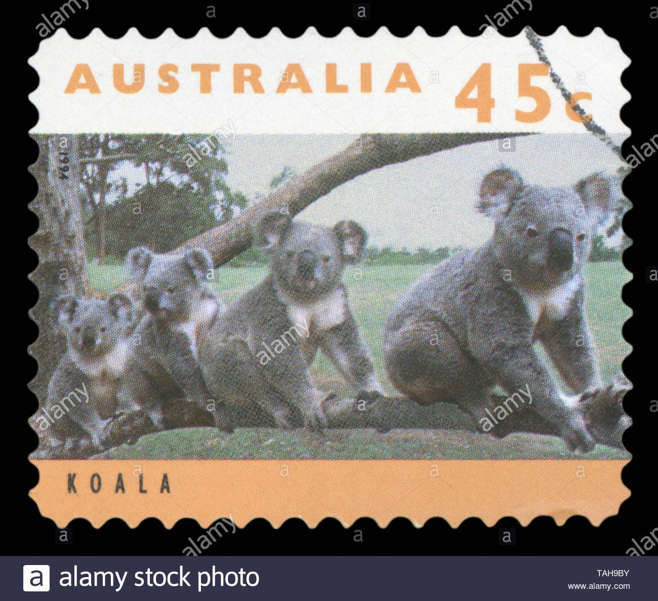 AUSTRALIA - CIRCA 1994: post stamp printed in Australia shows four koalas on tree branch; Scott 1277 45c; circa 1994 - Stock Image