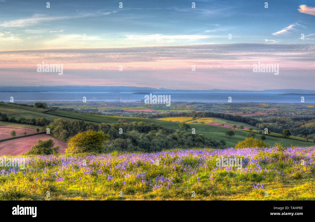Quantock Hills Somerset to Hinkley Point Nuclear Power Station and the Bristol Channel with bluebells in colourful HDR - Stock Image