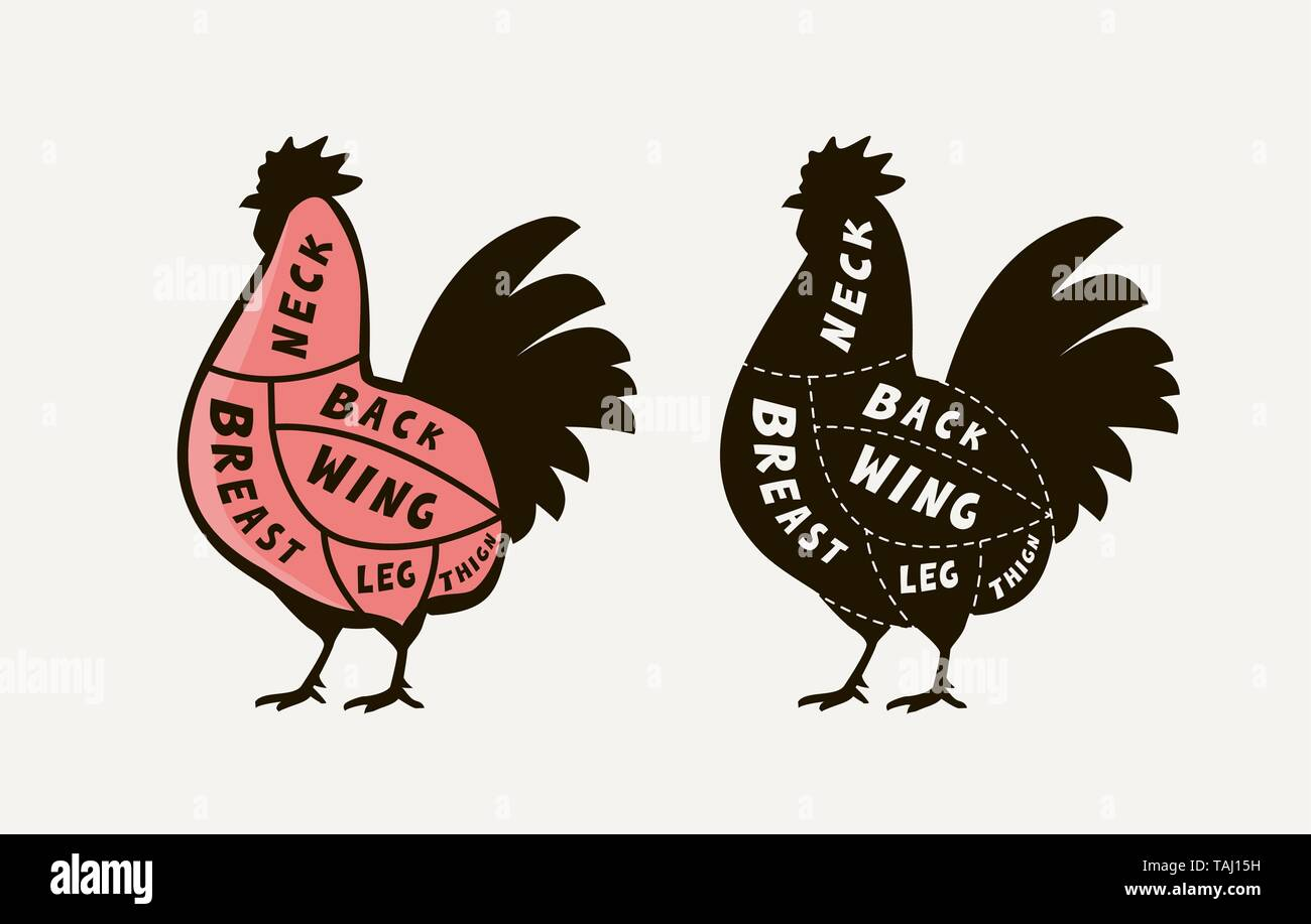 Diagram guide for cutting meat rooster, butcher shop. Chicken vector - Stock Image