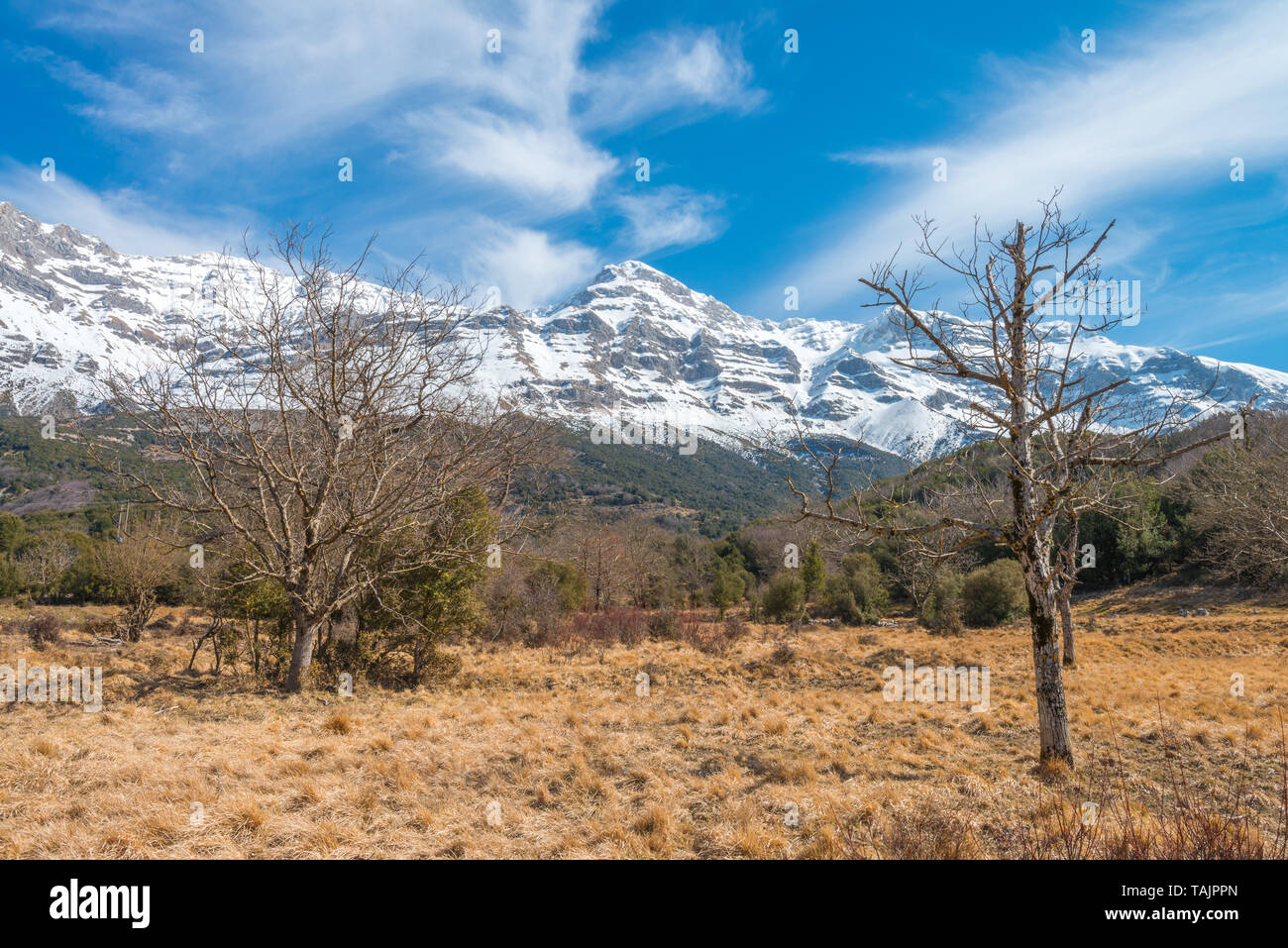 Snowcapped mountains in the Greek Alps, snow-laden mountains of Greece tower above the grassy meadows still yellow after the snowmelt. - Stock Image