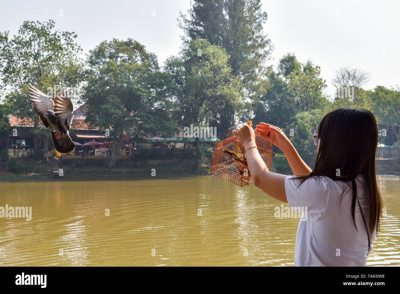 Young Woman release  birds at Ping river Chiang Mai .  In the Buddhist religion, some people believe that releasing animals back into the nature can help an individual to accrue merit. - Stock Image