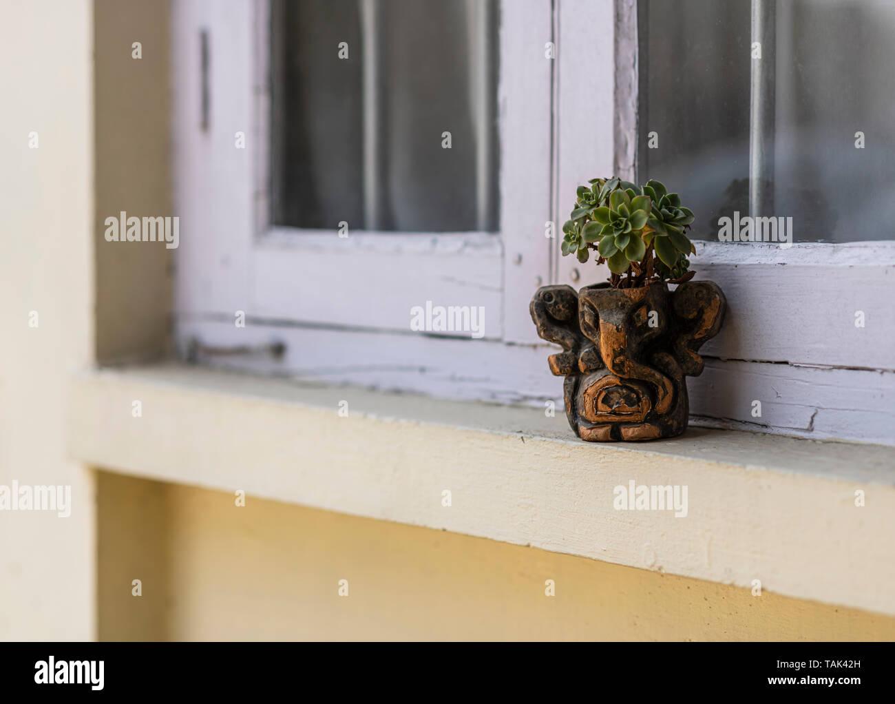 Echeveria A Succulent Growing In A Garden Pot Plant Pot Resting