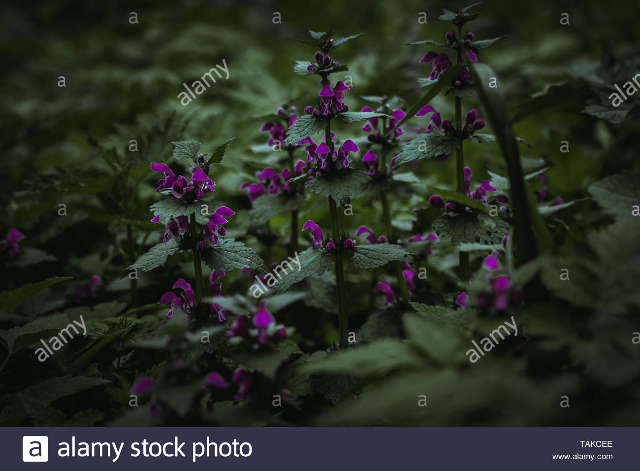 green plants in the forest - Stock Image