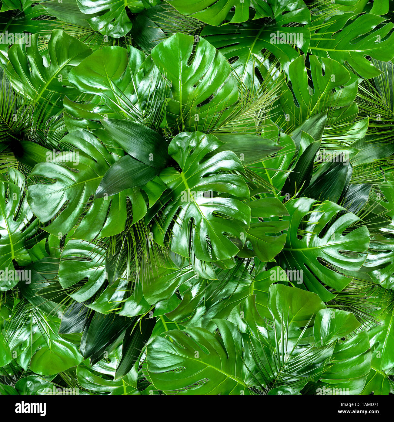 Seamless Green Tropical Jungle Plant Leaves Pattern Background Close Up Of Bouquets Of Various Fresh Palm And Monstera Greenery Summer Texture Stock Photo Alamy If your going through a tough time whether it be chemo or alopecia or just have thinning hair through some medications tropical leaves. https www alamy com seamless green tropical jungle plant leaves pattern background close up of bouquets of various fresh palm and monstera greenery summer texture image247541141 html