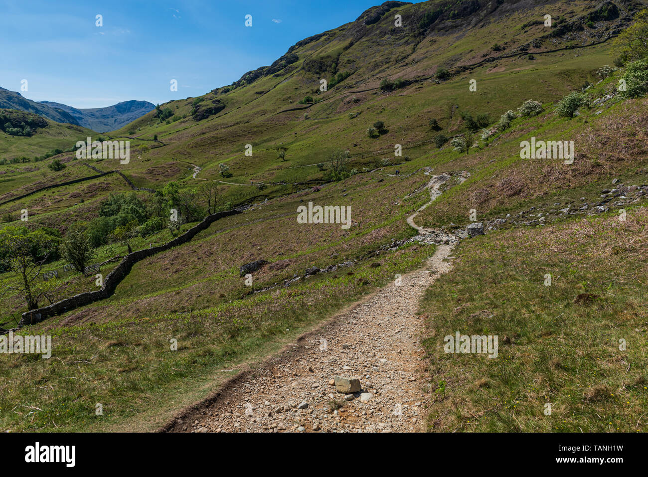 The Allerdale Ramble above Rosthwaite in Borrowdale - Stock Image