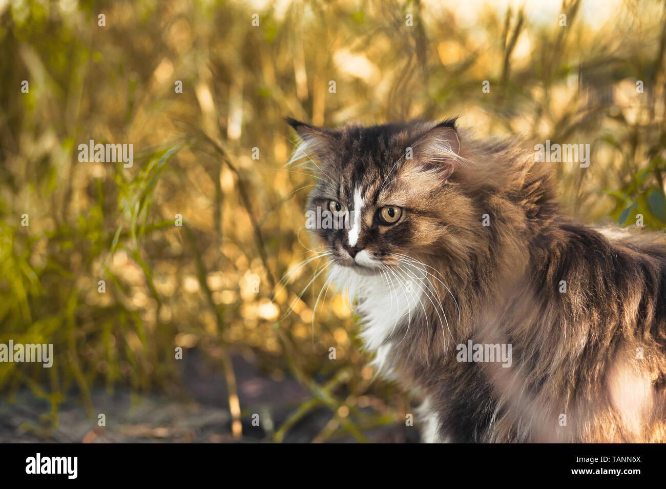 Katze - Stock Image