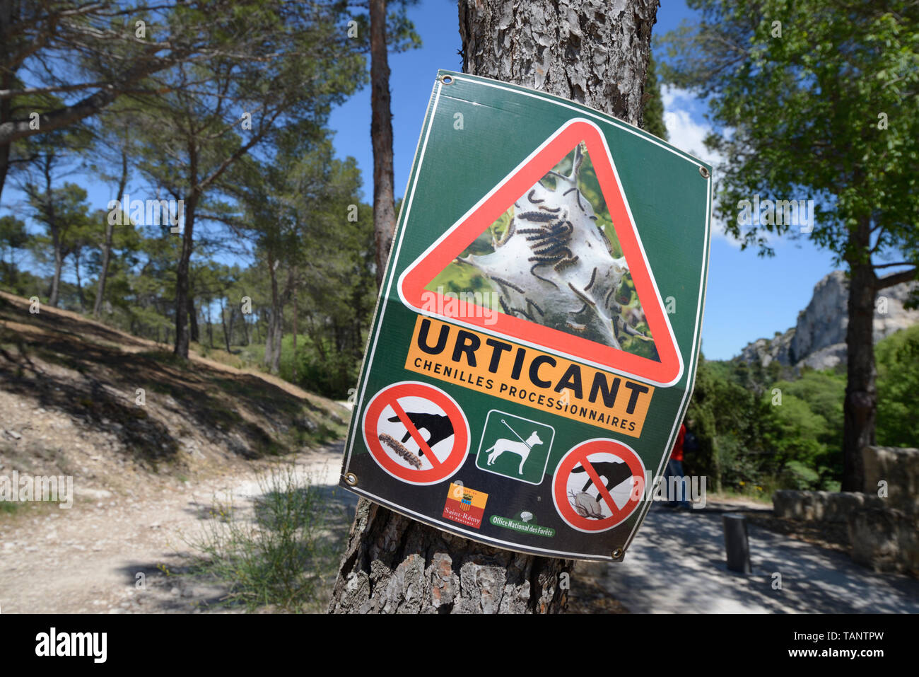 Warning Sign to Walkers about Pine Processional Caterpillars or Larvae, a Potential Health Hazard due to their Irritating Hairs Provence - Stock Image