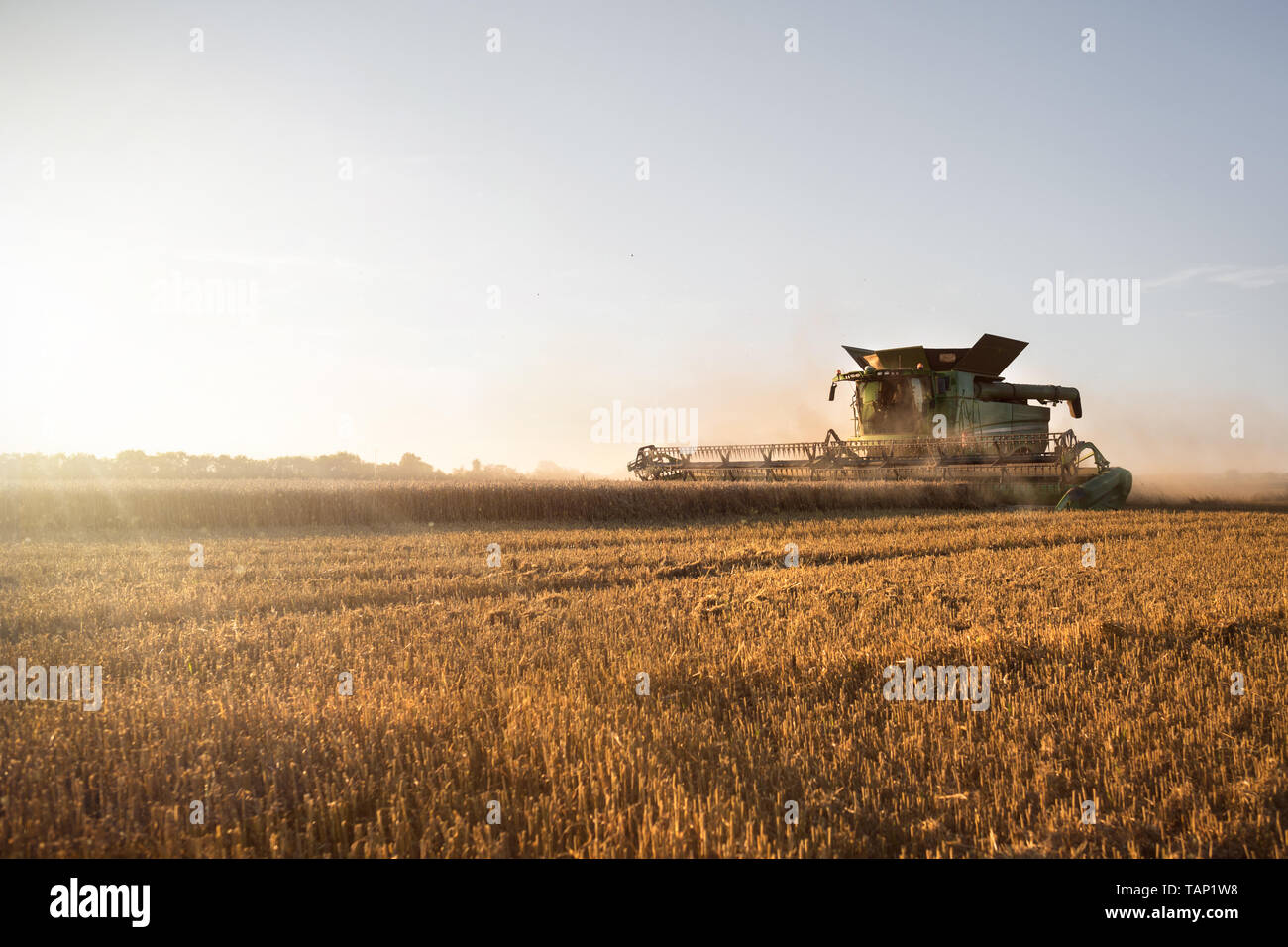 Harvested wheat field with a working combine harvester at sunset Stock Photo