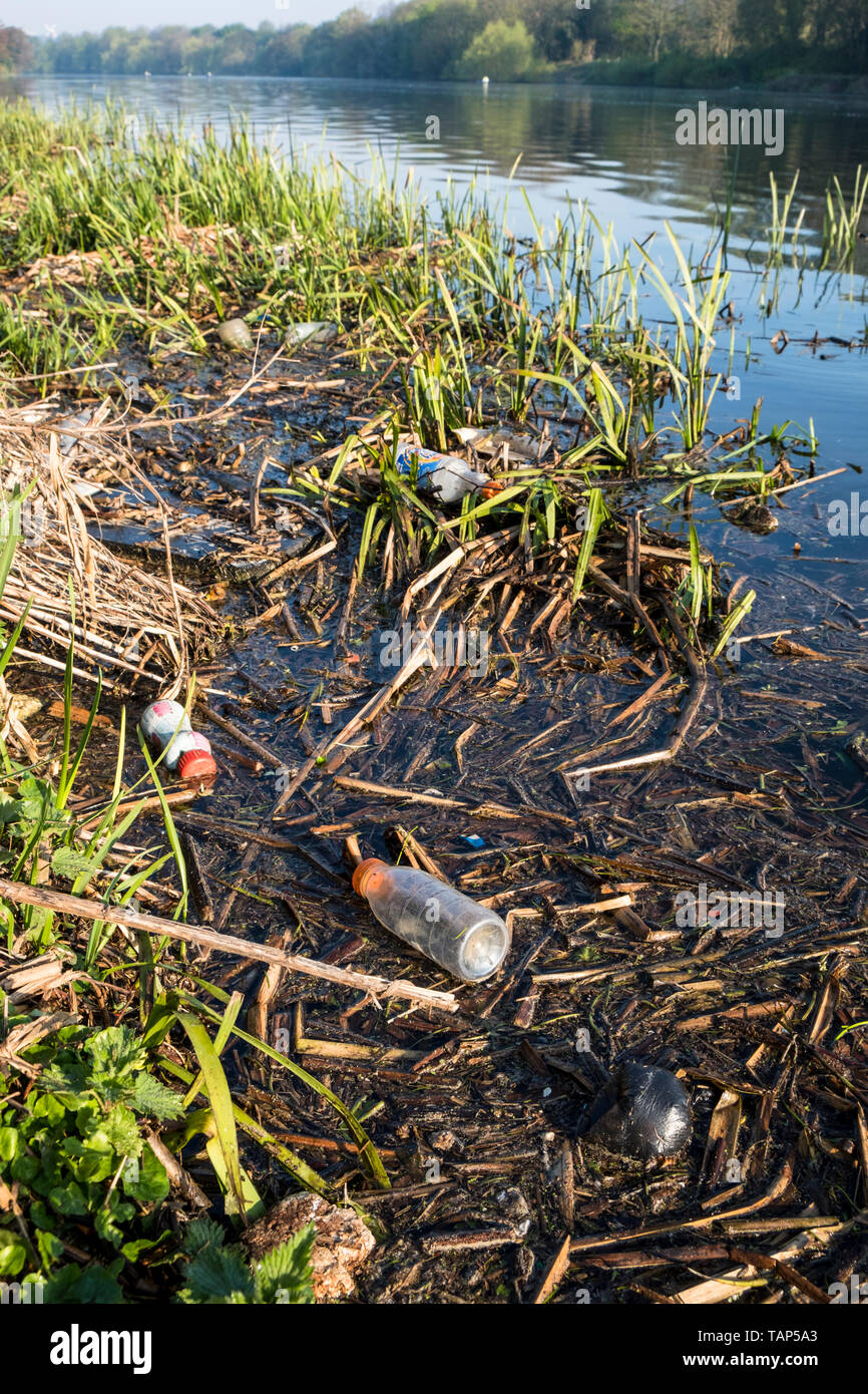 River pollution. Plastic bottles, waste and other litter in reeds on the banks of the River Trent, Nottinghamshire, England, UK - Stock Image