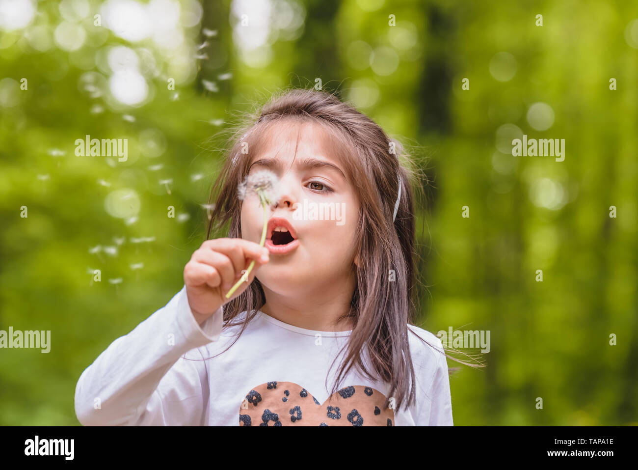 Outdoor portrait of  adorable four years old cute little girl blowing a dandelion wild flower at meadow in a sunny day Stock Photo