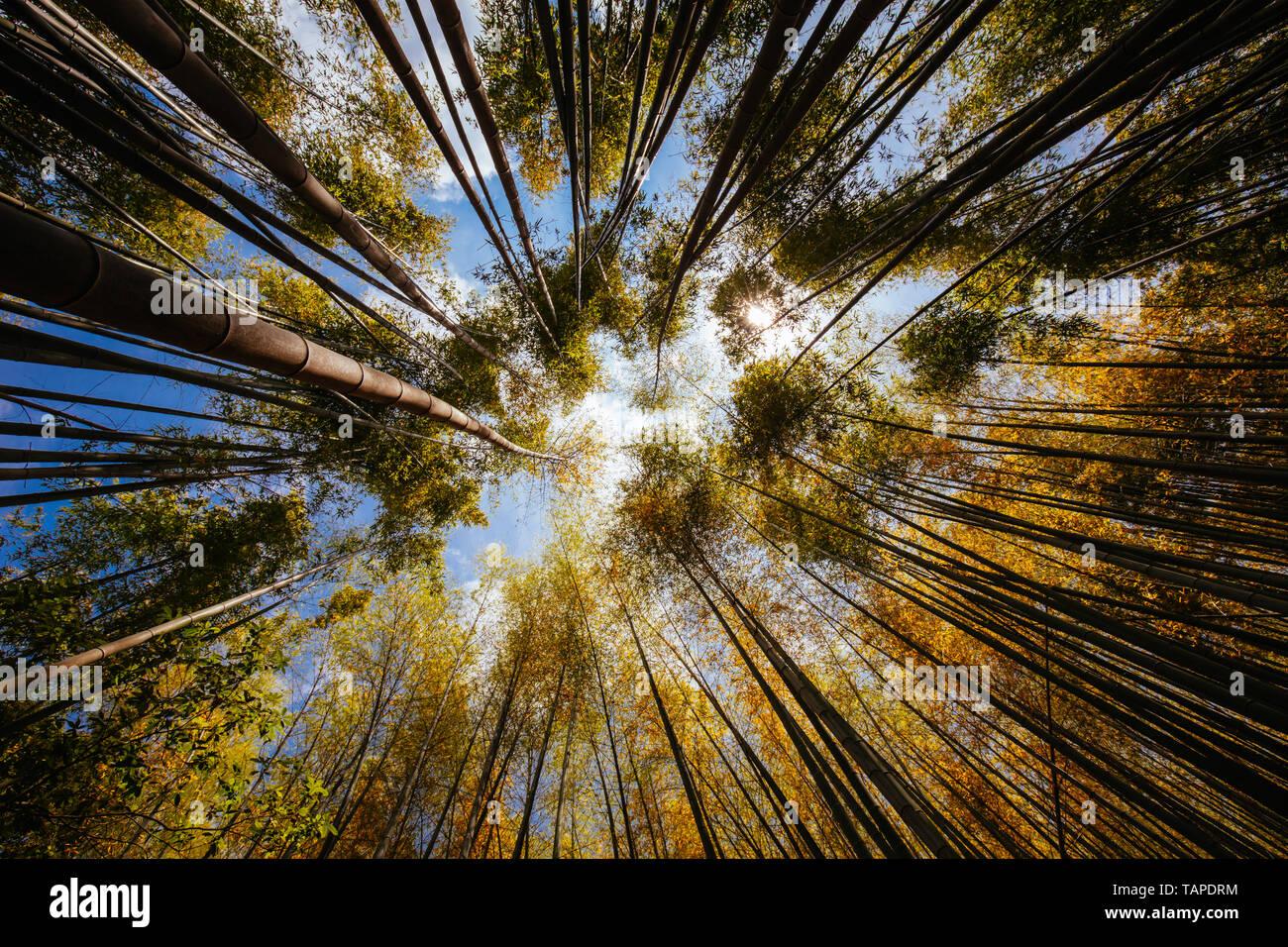 Secret Bamboo Forest of Fushimi Inari Shrine Stock Photo