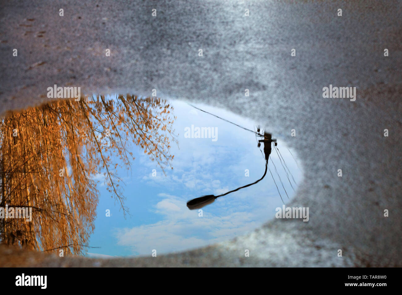 Mirror blurred reflection after a rain of the blue cloudy sky, the silhouette of a street lamp and a tree sunlit in a puddle on the asphalt. - Stock Image