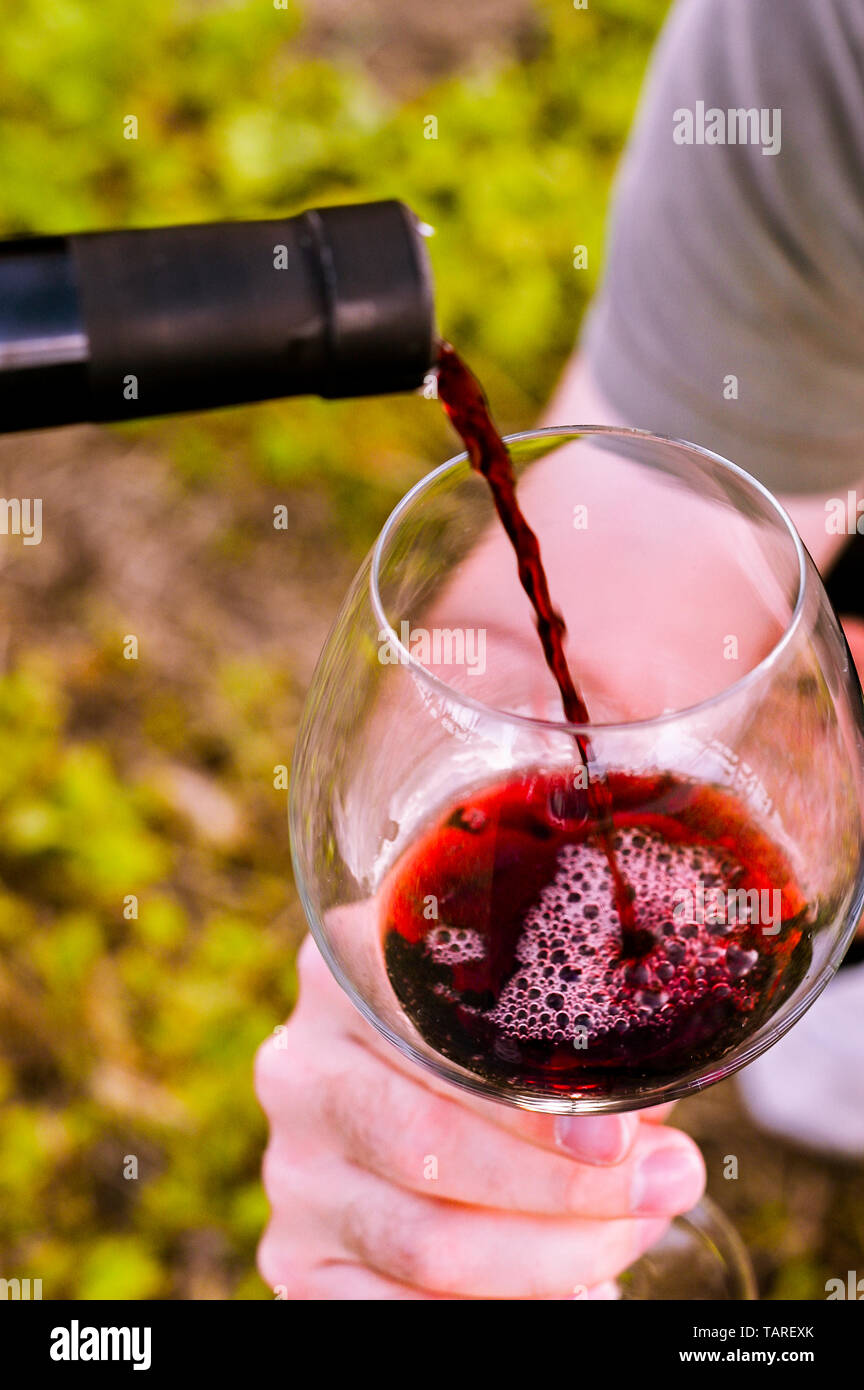 A glass of red wine in male hands. Man with a glass among green vineyards. Live style at sunset. Copy space - Stock Image