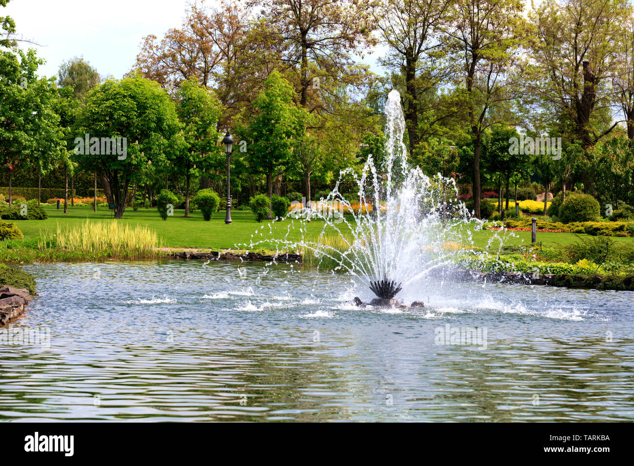 A beautiful fountain in the midst of a spring pond against the backdrop of a picturesque city park, green meadow and flowering chestnuts. - Stock Image