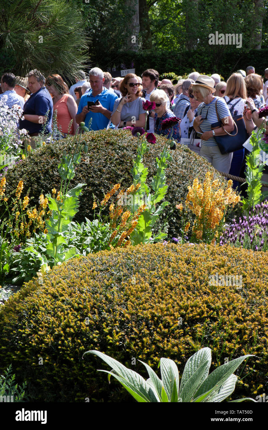 RHS Chelsea Flower Show 2019: crowds of visitors admire and photograph the Morgan Stanley Garden designed by Chris Beardshaw, features a flowering dwarf chestnut, topiary mounds and a relaxation pod. Stock Photo