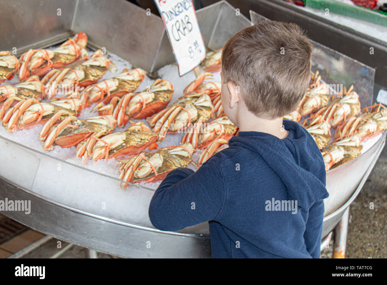 A young boy looks at Dungeness crab for sale at a fish market in Seattle, Washington. - Stock Image