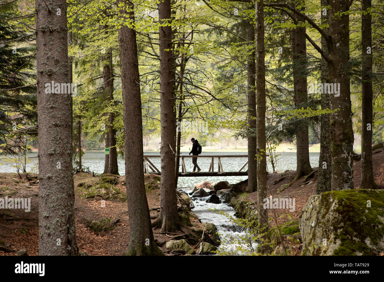 Dark silhouette of man walking through the wooden bridge in forest. Mountain lake, stream. Hiking in forest. Natur park hiking trail. Black Forest. - Stock Image