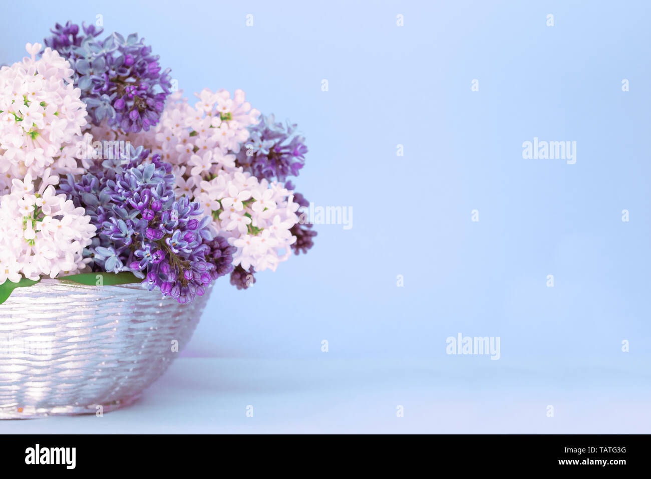 Colored Lilacs On Light Blue Pastel Background Delicate