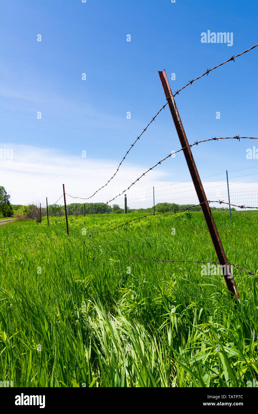 Rusted barbed wire fence with green field and blue skies in the background. Stock Photo