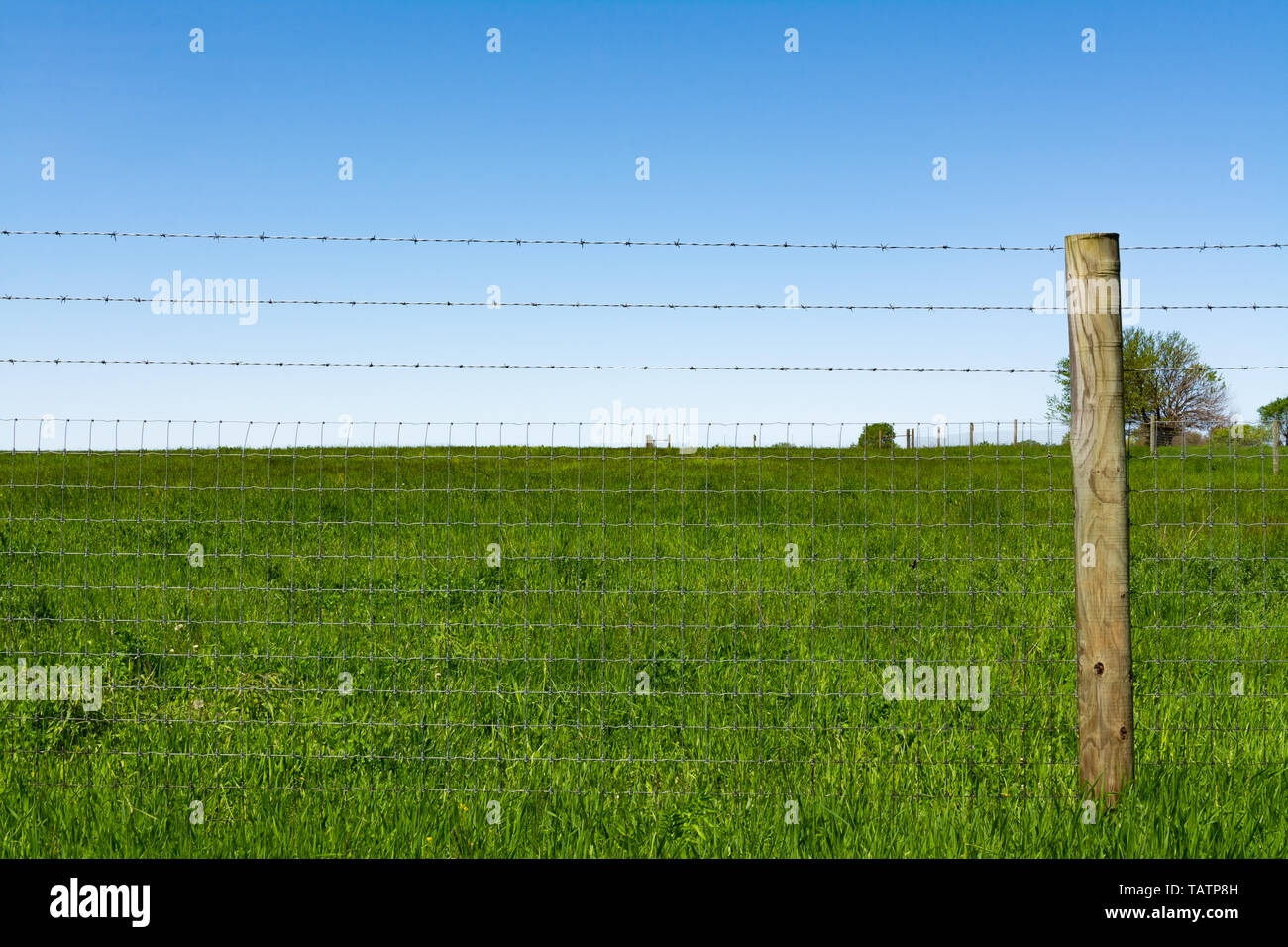 Single wooden post and wire fence with blue skies and prairie in the background. - Stock Image