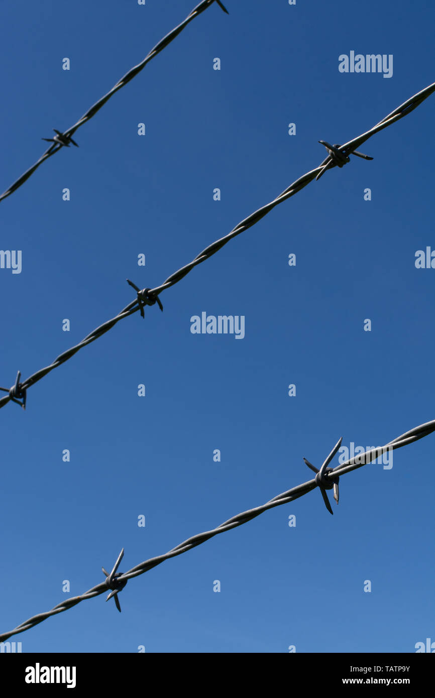Barb wire with blue skies in the background. - Stock Image