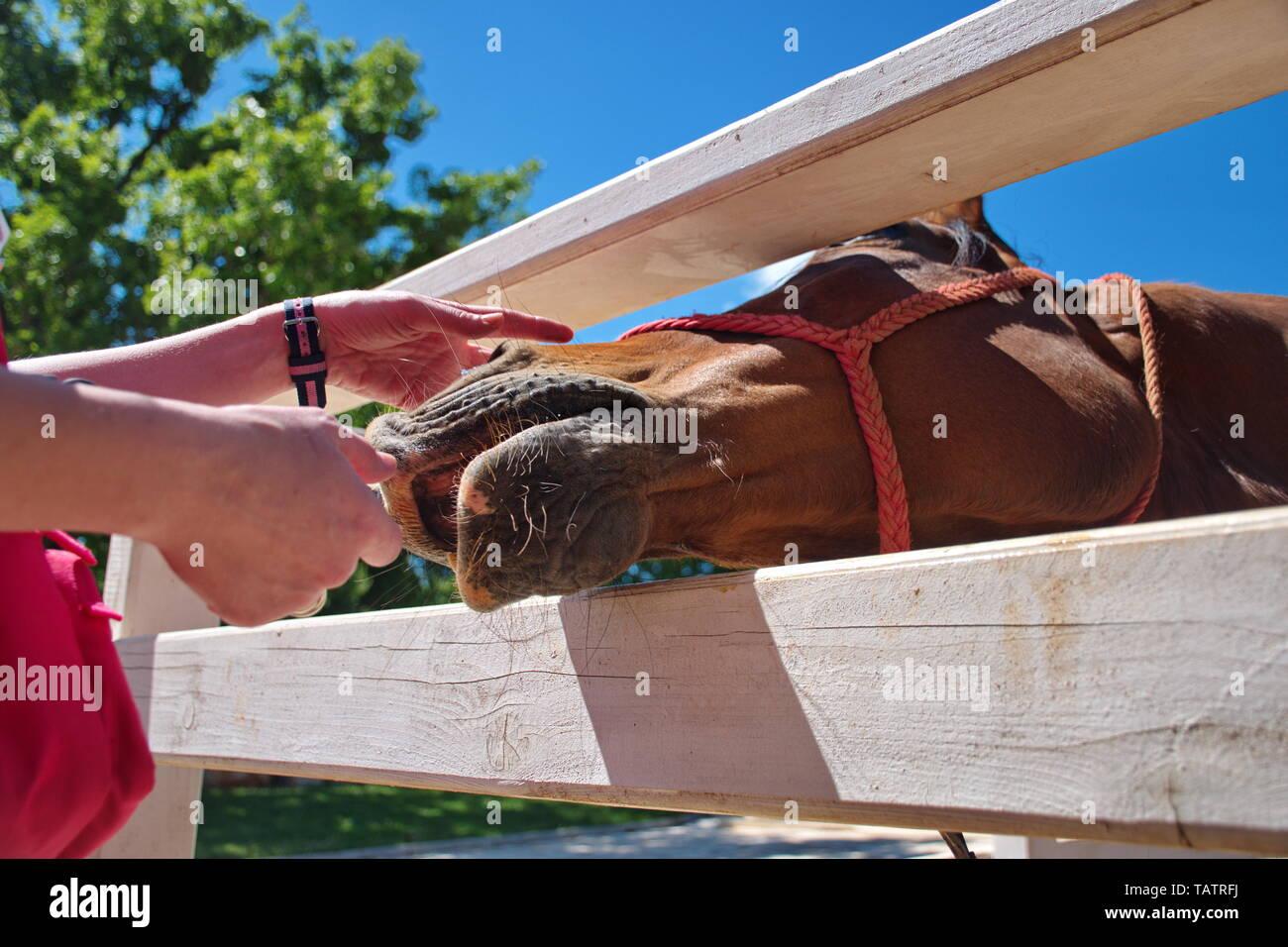 la réputation d'abord profiter de prix pas cher enfant Closeup of horse in manege Stock Photo: 247637030 - Alamy