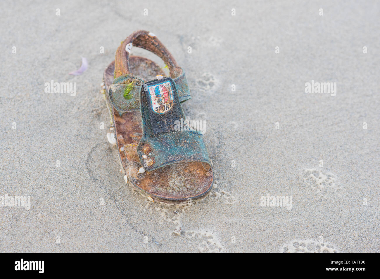 Da Nang, Vietnam - November 8, 2018: Rotten sandal (with writings on it: 9, sport, fashion, classic) thrown back by sea storm at the beach. - Stock Image