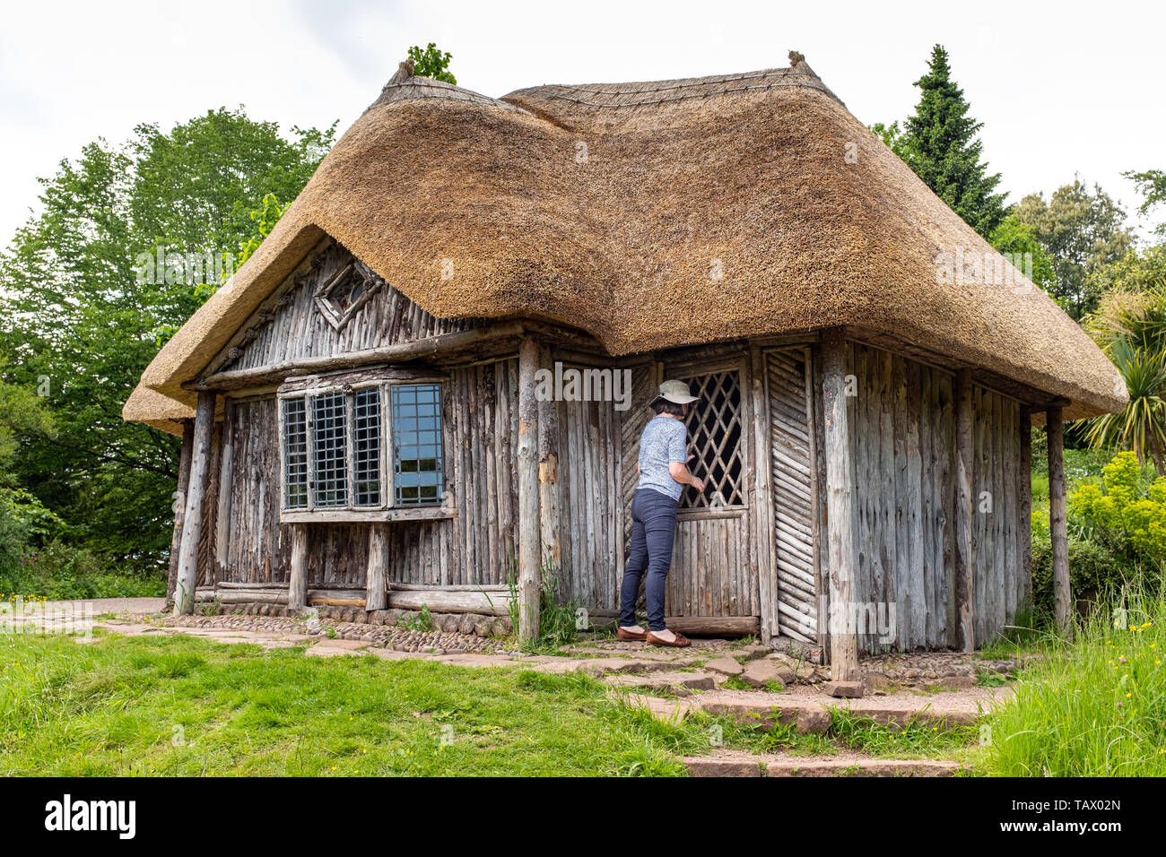 Taking a peek inside, the Bear's Hut, Killerton Estate, National Trust, Killerton, Devon, UK - Stock Image