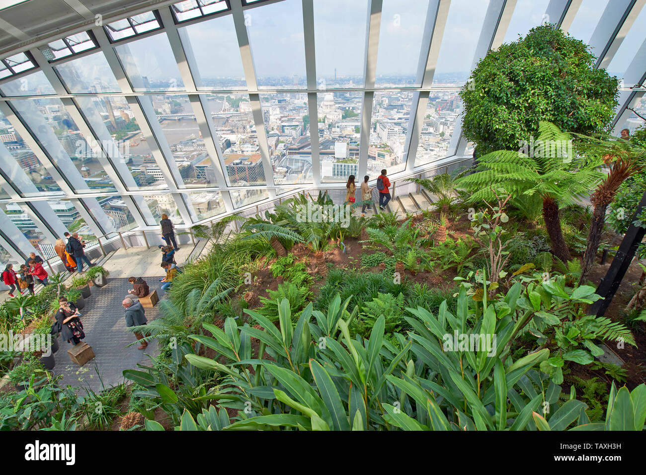 LONDON 20 FENCHURCH STREET THE WALKIE TALKIE SKYSCRAPER THE SKY GARDEN AND PLANTS WITH PEOPLE ENJOYING THE VIEW OVER THE RIVER THAMES AND ST PAULS ARE - Stock Image