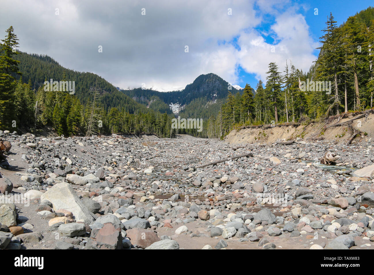 Paradise River, Mount Rainier National Park - Stock Image