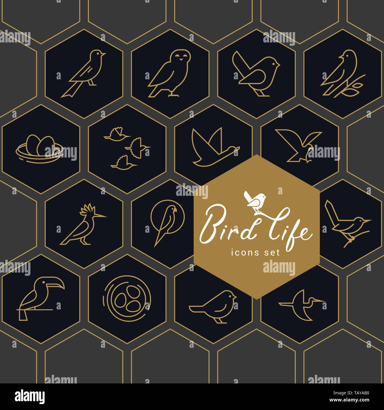 Vector icon set of icons inscribed in honeycombs on the theme of the wild life of birds. Early birds in a linear style on a dark background. Design co Stock Vector