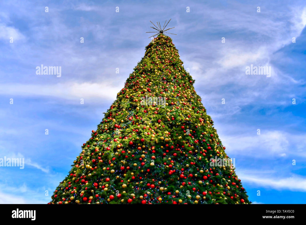 Orlando, Florida . December 24, 2018. Top view of Christmas Tree on bluelight sky background in Lake Eola Park area at Orlando Downtown. Stock Photo