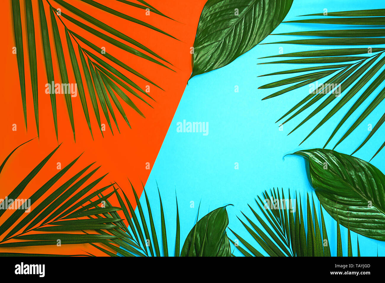 Tropical green palm leaves on colorful background. Bright orange coral and blue colors. - Stock Image