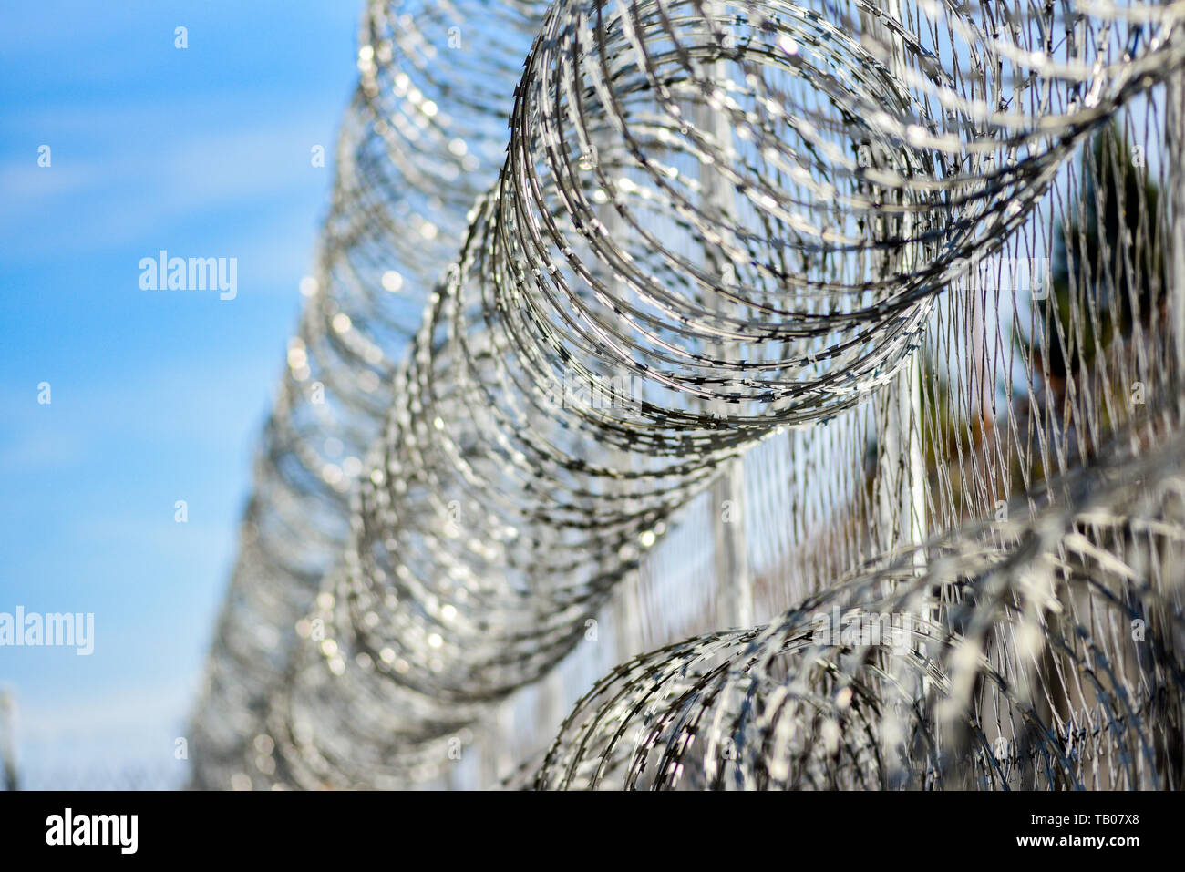 Barbed wire in prison, protecting prisoners from escaping. - Stock Image