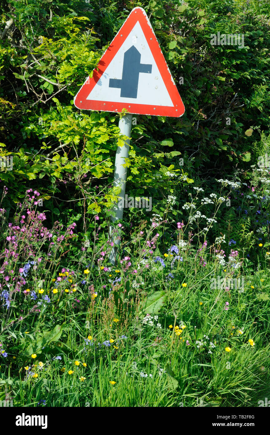 Roadside wild flowers, including Red Campion, Bluebells and Buttercups near Stoke Climsland, Cornwall, England - Stock Image
