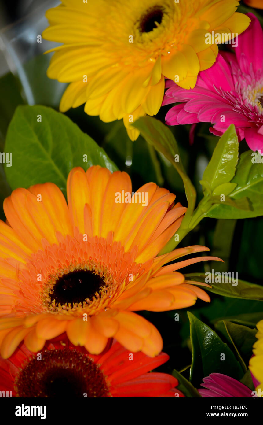 summer time flowers orange , yellow and pink flowers and green leaves Stock Photo