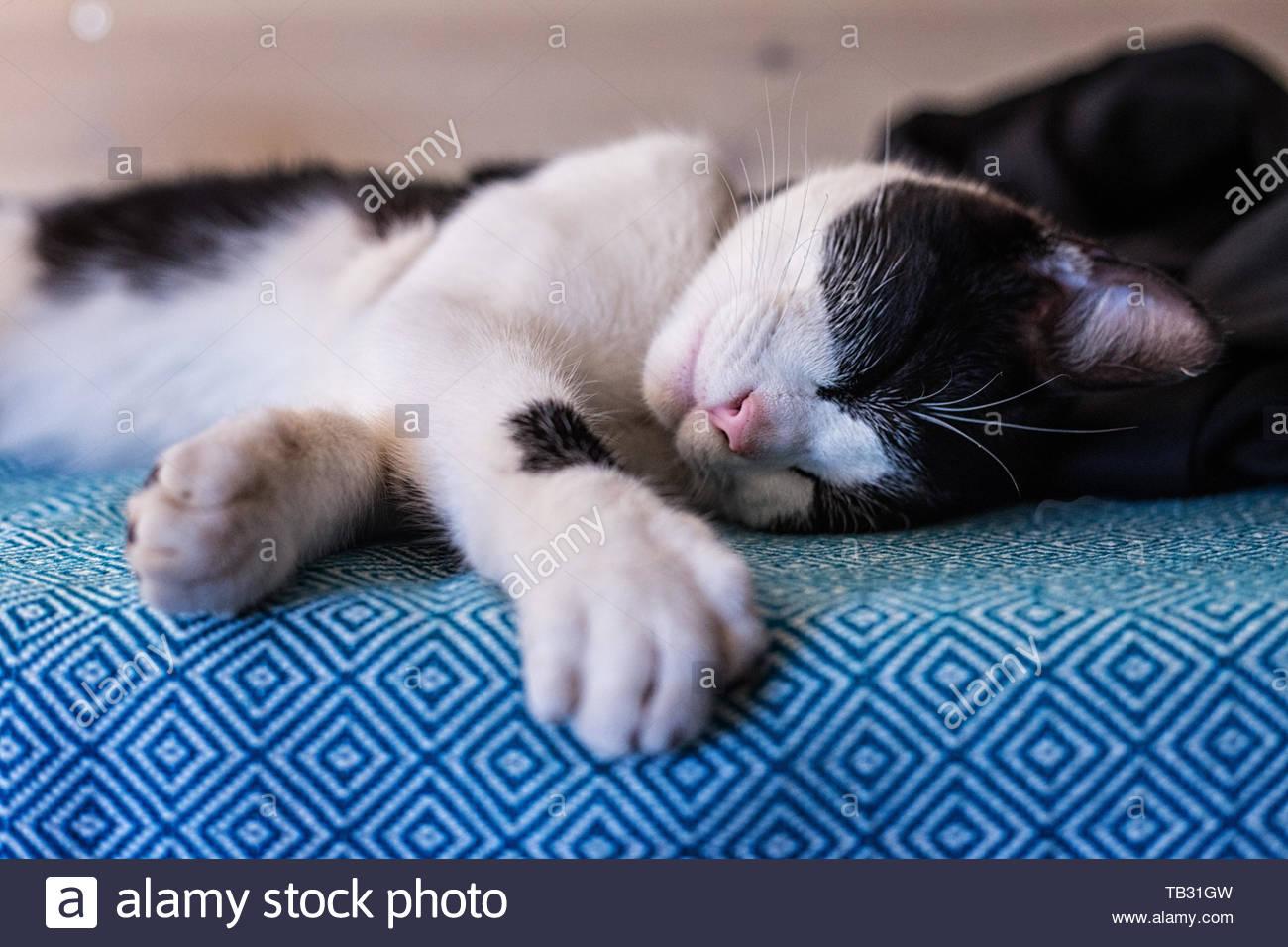 Sleeping Cat Black And White Cat Cute Animals Kitty Kitten Stock Photo Alamy